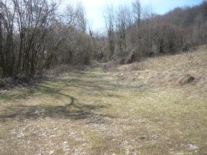 Comincia a tingersi tutta di verde la strada verso Mezzomonte