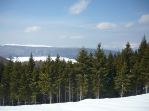 Vista dal Monte Ceresera verso la piana del Cansiglio e le Alpi bellunesi