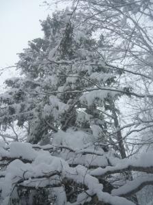 Alberi carichi di neve