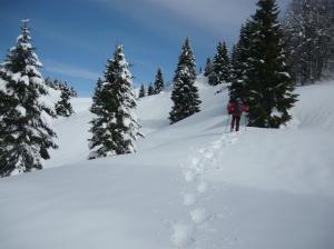 Lungo il versante sud del Col Cornier