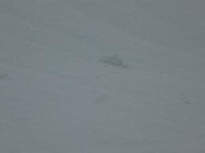 Orma della ciaspola di Tony che scivola su un versante. La neve comincia a mollare.