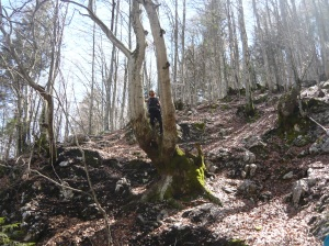 Scendendo attraverso il bosco