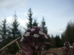 Natura floreale