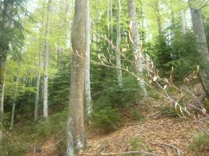 Fuori traccia in mezzo al bosco
