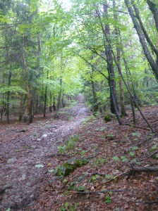 Salendo in mezzo al bosco