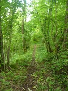 Sentiero verso Casasola