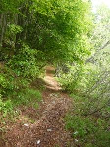 Sentiero nel bosco verso casera Capovilla