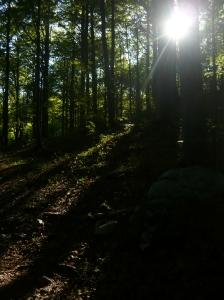 Giochi di luce attraversando il sentiero CAI 971