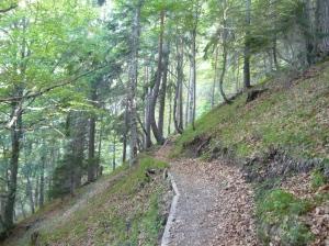 Inizio nel bosco del sentiero CAI 353