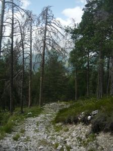 Sentiero CAI 214