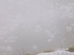 Marmotte nascoste dalla nebbia