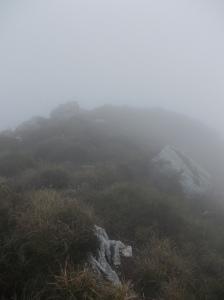 Ancora nebbia, visibilità massima 15 metri
