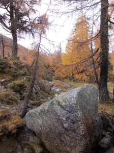 Magnifici colori dell'autunno scendendo fuori traccia