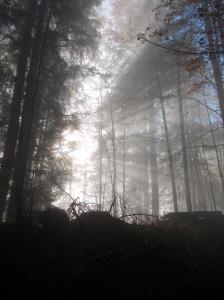 Giochi di luce nel bosco