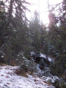 La prima neve