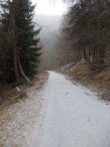 Strada forestale per Mezzomonte