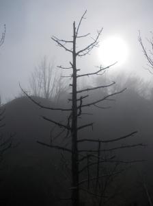 Giochi di luce e nebbia