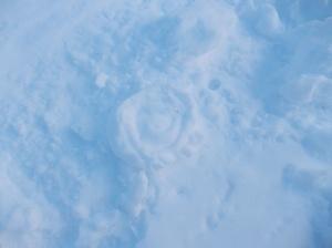 Rosa di neve