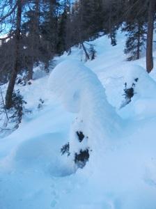 Abete sotto la coperta di neve