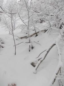 Salendo... neve immacolata