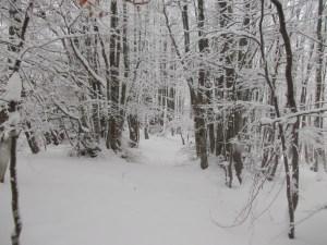 Tra il bosco