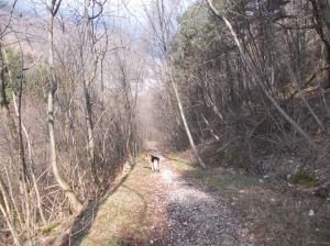 Maso che mi accompagna lungo la prima parte dell'escursione