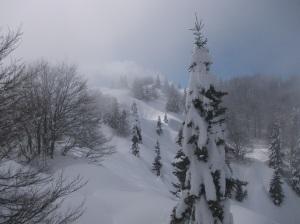 Vista verso il bosco del Cansiglio
