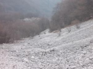 Camosci lungo il ghiaione