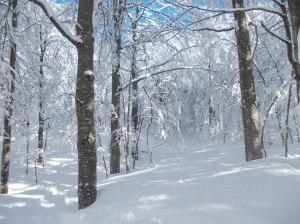 Nel magnifico bosco