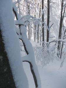 La neve aggrappata agli alberi