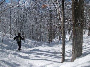 Nel bosco fra la neve immacolata