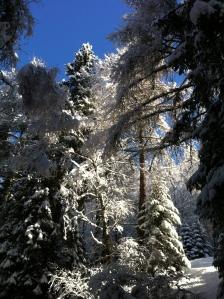 Neve... tanta neve