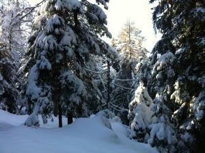 Nel meraviglioso bosco del Pian di Gembro