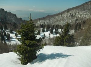 La piana del Cansiglio e il monte Pizzoc
