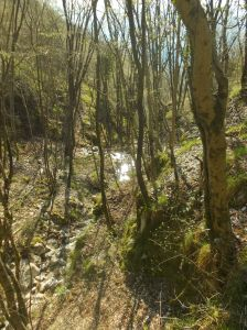L'acqua della sorgente che scorre verso valle