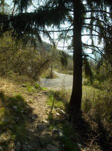 Ecco la strada forestale Mezzomonte - Cansiglio