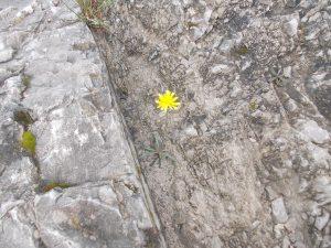 Forza della natura