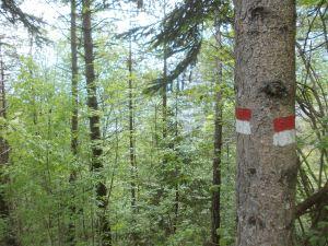 Nessun panorama nel bosco