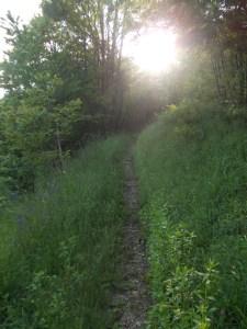 Sentiero che porta verso la chiesetta di San Daniele