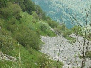 La piccola comunità di quattro camosci della Val de Croda