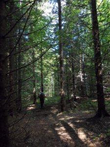 Ultimo tratto di bosco prima della casera