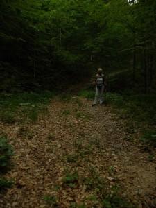 Strada forestale - sentiero CAI 412