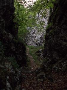 Massi sorgono nel bosco; ed è magia