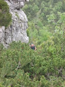 Graziano risale fra i mughi lungo il sentiero CAI 412
