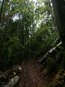 Sentiero CAI 764