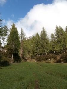 Il bosco si fa più rado lasciando spazio a piccoli ma verdissimi prati