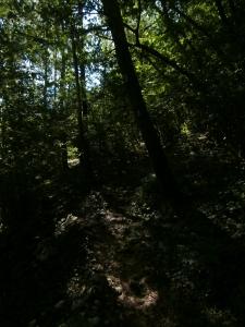 Tra il fresco degli alberi