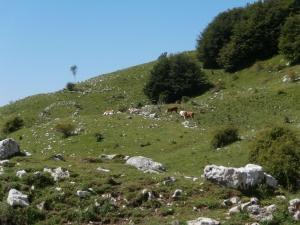 Le mucche di casera Val de Lama