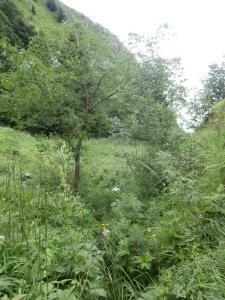 Il sentiero CAI 984a invaso dalle piante
