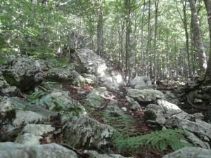 Sentiero CAI 924, inizio nel bosco sopra casera Capovilla